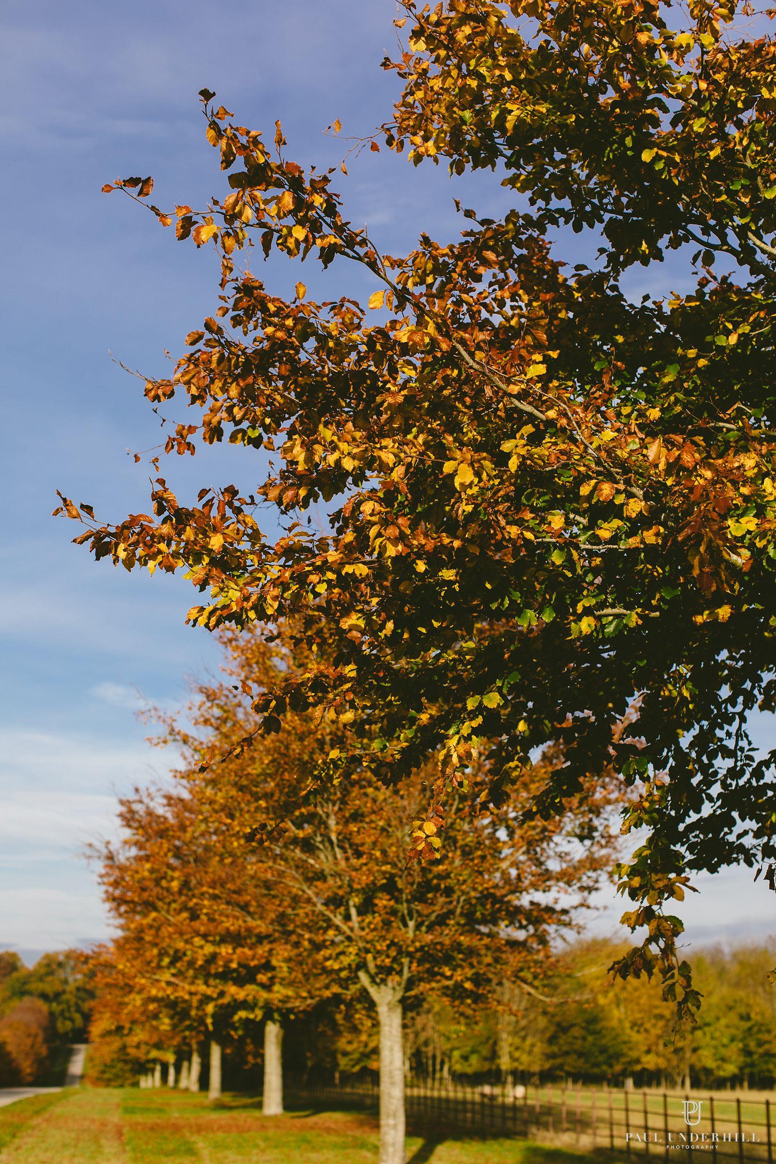 autumn-leaves-larmer-tree-gardens